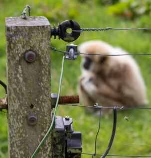"Electric Web by Steve Prior Highly Commended - Summer Challenge ""Fences"" Sept '14"
