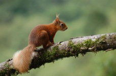 Looking for nuts by Viv Rumbold
