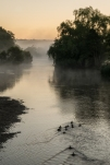 Misty Morning by Linda Farquhar
