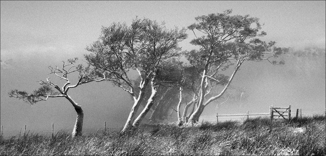 Wind Driven by John Williams
